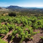 Pozvánka na degustaci vín Sardinie